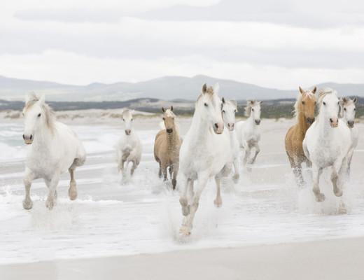 horses-beach-running